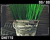 Bucket Plant