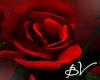 !!! GothicRose Roses lll