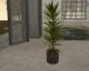 Innards House Plant