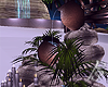 |FS. Detrea Fountain