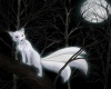 kitsune Kingdom