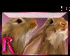 *R* Rabbits Enhancer