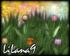 *LL* Tulips enhancer