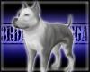 Blue Pitbull Pet