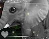 Baby Elephant -Animated