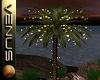 ~V~Party Palm 2