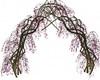 Delicate Vine Arch 2