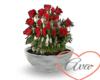 Flower Pot Roses