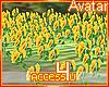 ! Sunflower Field