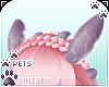 [Pets] Jura | ears v5