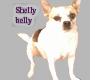 shelly belly sticker