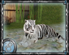 ~Ele~ Pet white tiger