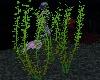! !Under Water Plants