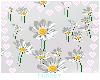 ♡ Little Daisies