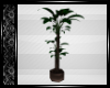 City Loft Plant 2