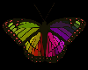 💎 Rainbow ButterFly 3