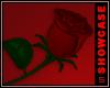 Midnight Lover l Rose
