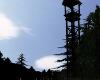 Dark Woods Sunrise