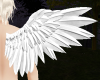 Angel Wings M/F