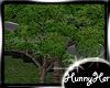 Louisiane Tree V2