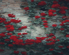 Wall Roses Poster