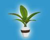 [Kit]Plants