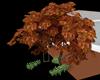 !Em Autumn Maple Tree