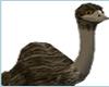 NEW Ostrich