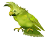 !V! Our Island Bird