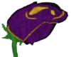 Purple/gold rose