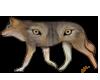 WolfinWolf