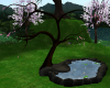 Koi rock pond