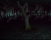 dark forest photo room