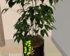 ID: Noir room plant