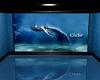 Cisse Underwater World