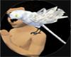 Casco Birds Qr