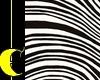 Zebra Photoshoot