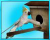 Cockatoo Pet Bird