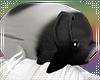 Animated Head Pig