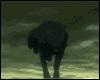 [R] Wolf Running