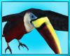 Black Tropical Bird