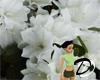 White Flower Backdrop