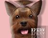 lPl Dog