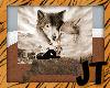 JT Wolf Photo Seat