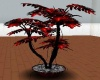black and red fern