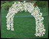 Daisy Wedding Arch CC