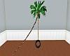 Palm Tree Tire Swing