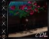 !C* C Pink Roses
