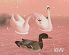 "Iv""Water Birds"