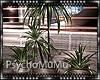 PS|: Paloma Plant